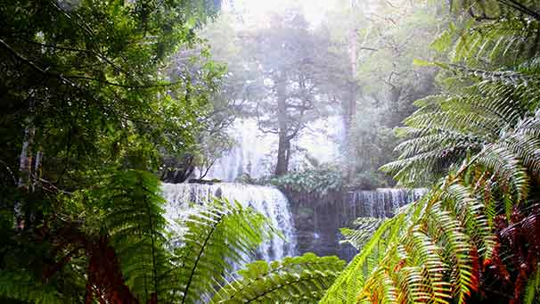 Ferns and the Russel Falls, Tasmania