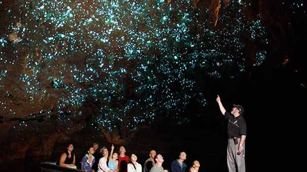 Glowworms in the Waitomo caves