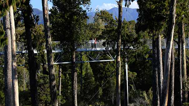 The West Coast Treetop walk